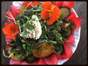100% Local and Wild Salad.
