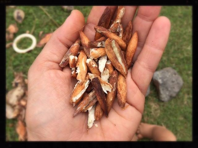 Saturday's Wild Food Hike in Kapiolani Park